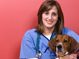 Veterinary Assistant Specialist Program | Auburn University